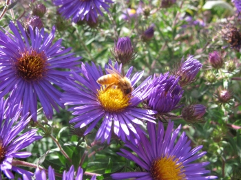 aster_02