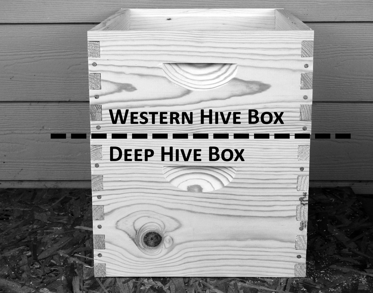 hive boxes. The most important thing to remember is to make sure the