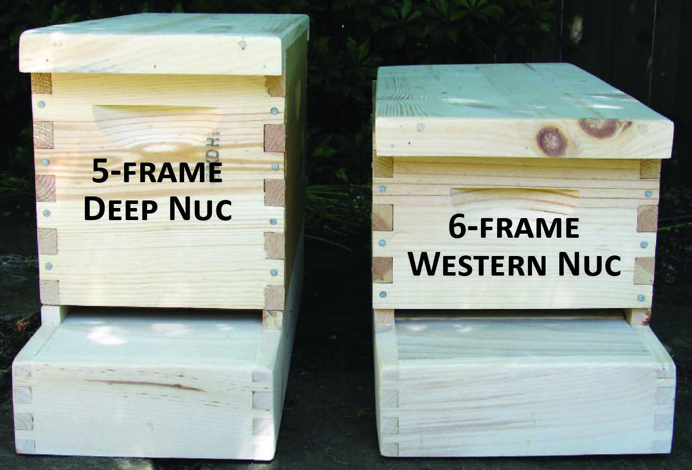 8 Frame Medium Hive
