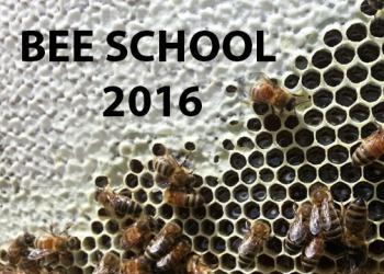 BEE_SCHOOL_2016